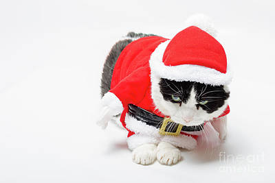 Photograph - cute Christmas Cat by Benny Marty