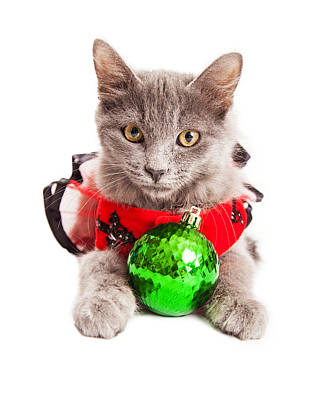 Cute Christmas Kitten Looking Into Camera Art Print
