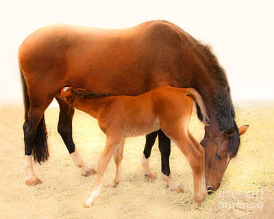 Photograph - Cute Colt And Mare Nursing  by Jerry Cowart