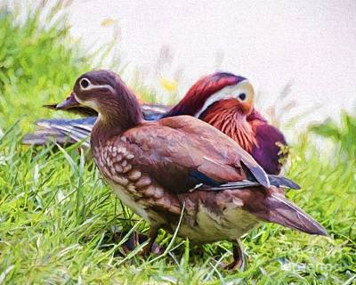 Painting - Cute Couple - Mandarin Ducks by Kerri Farley