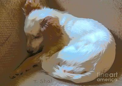 Photograph - Cute Dog Abstract  by Tara Shalton
