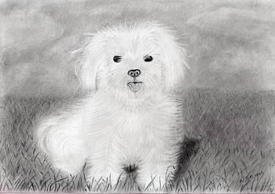 Maltese Drawing - Cute Dog by Selvam Venkatesan