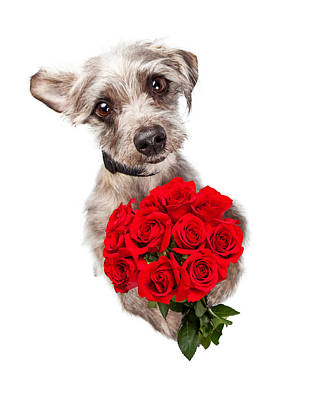 Cute Dog With Dozen Red Roses Art Print by Susan Schmitz