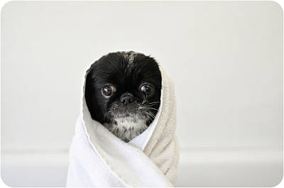 Of Dogs Photograph - Cute Dog Wrapped by Emma Mayfield Photography