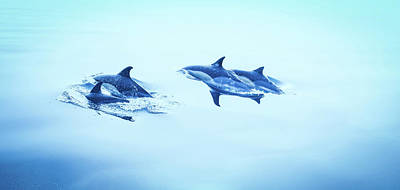 Photograph - Cute Dolphins Swimming In The Bay - Dolphin Wall Art Photo by Wall Art Prints