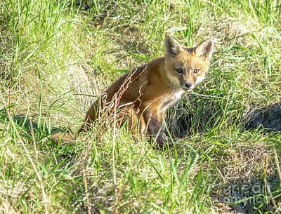 Photograph - Cute Fox Kit by Cheryl Baxter