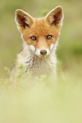 Adorable Photograph - Cute Foxy Face by Roeselien Raimond