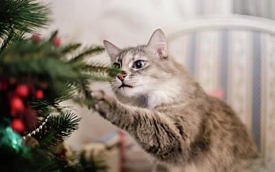 Cats Photograph - Cat And Christmas Tree by Oksana Ariskina