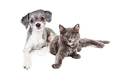 Cute Grey Kitten And Puppy Laying Together Art Print