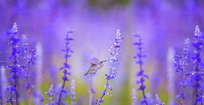 Bird Photograph - Cute Hummingbird On Purple Flowers Spring Meadow Art Prints by Wall Art Prints