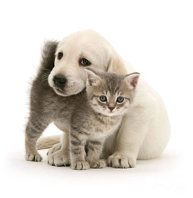 Photograph - Cute Kitten And Perfect Puppy by Warren Photographic