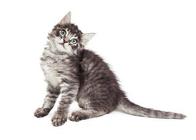 Adorable Photograph - Cute Kitten Tilting Head Over White by Susan Schmitz
