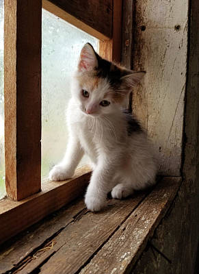 Photograph - Cute Kitty In Window by Brook Burling
