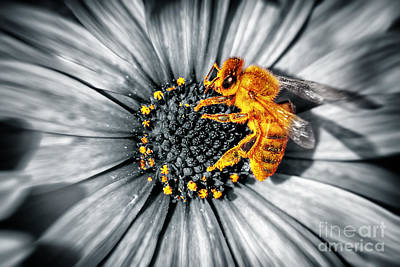 Photograph - Cute Little Bee On A Daisies Flower by Anna Om