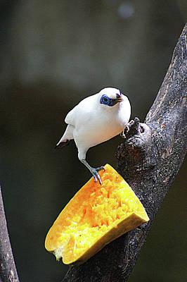 Photograph - Cute little bird by Daria Klepikova