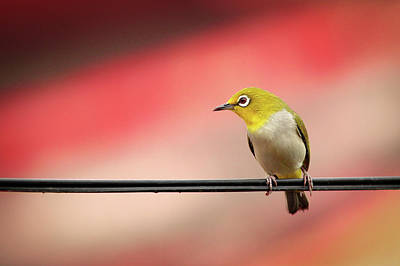 Photograph - Cute Little Bird On The Wire Wall Art Prints by Wall Art Prints