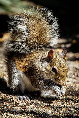 Photograph - Cute Little Brown Squirrel by Sabrina L Ryan