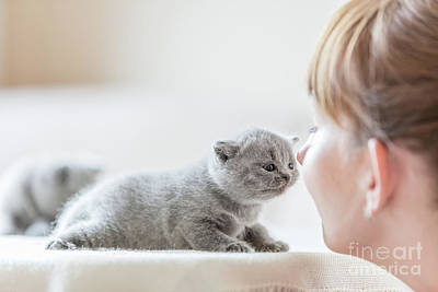 Care Photograph - Cute Little Cat And Woman Rubbing Noses. by Michal Bednarek