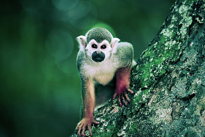 Photograph - Cute Monkey On The Tree Art by Wall Art Prints