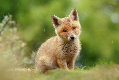 Cute Overload Series - Best Baby Fox Ever Art Print by Roeselien Raimond