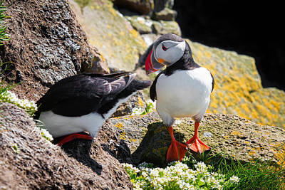 Photograph - Cute Puffin Couple In Iceland Latrabjarg by Matthias Hauser