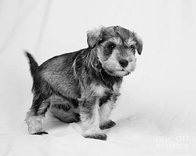 Photograph - Cute Puppy 2 by Serene Maisey