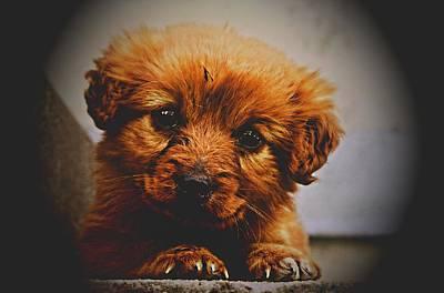 Cute Puppy Art Print by Ivet Morgan