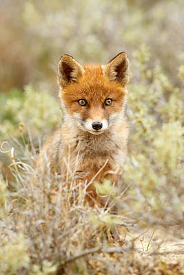 Child Photograph - Cute Red Fox Kit by Roeselien Raimond