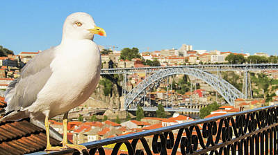 Photograph - Cute Seagull And Porto's Cityscape by Helissa Grundemann