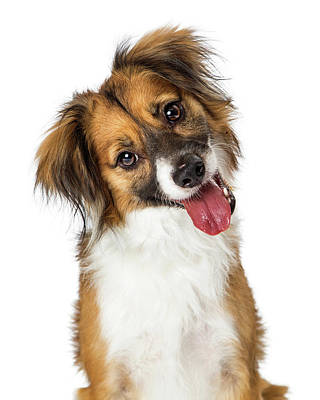 Photograph - Cute Small Happy Dog Tilting Head Looking Forward by Susan Schmitz