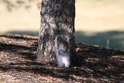 Photograph - Cute Squirrel by Vadim Levin