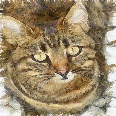 Drawing - Cute Tabby Looking Up by Tracey Harrington-Simpson