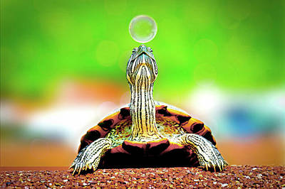 Photograph - Cute Turtle Playing On The Beach Wall Art Prints by Wall Art Prints