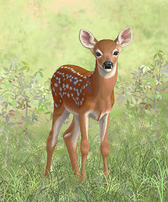 Whitetail Deer Wall Art - Painting - Cute Whitetail Deer Fawn by Crista Forest