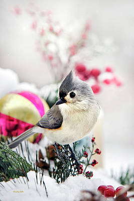 Tufted Titmouse Photograph - Cute Winter Bird - Tufted Titmouse by Christina Rollo