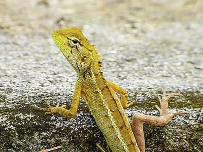 Cute Yellow Lizard Art Print