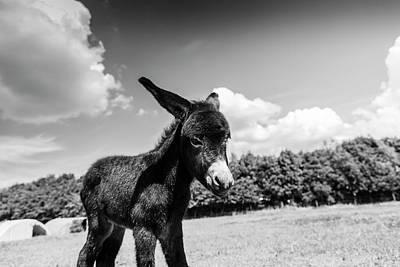 Photograph - Cuteness by Stewart Scott