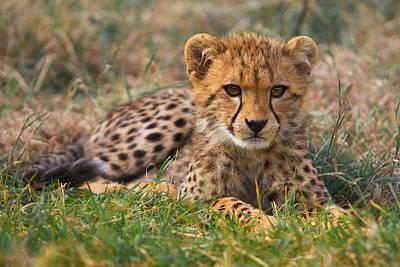 Cutest Cub Original by Gary Maynard