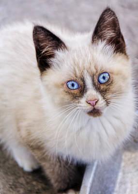 Cat Photograph - Cutest Kitten by LeeAnn McLaneGoetz McLaneGoetzStudioLLCcom