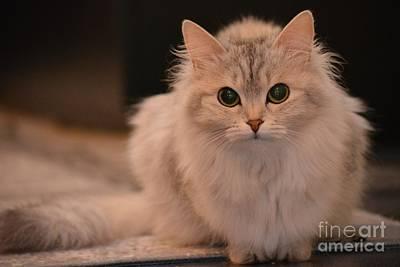 Kittie Photograph - Cutie Kittie With Yellow Lightening by Elizabeth Garraway