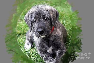 Irish Wolfhound Photograph - Cutie Pie by Ann Butler