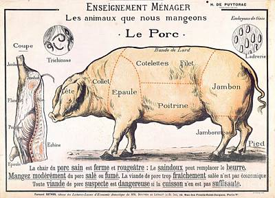 Vintage Drawing - Cuts Of Pork by French School