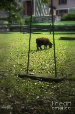 Photograph - Cuttalossa Swing by Debra Fedchin