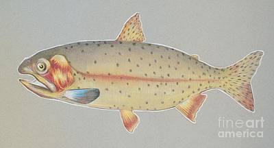Brown Trout Drawing - Cutthroat by Dennis Osborne