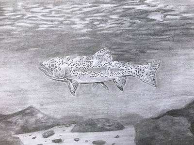 Cutthroat Trout Original
