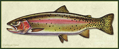 Painting - Cutthroat Trout Id by Jon Q Wright