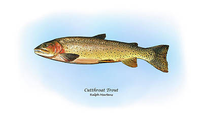 Trout Drawing - Cutthroat Trout by Ralph Martens