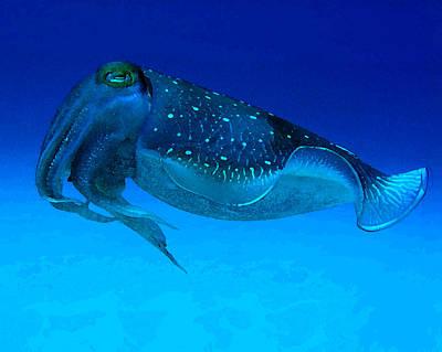 Cuttlefish Digital Art - Cuttlefish by Gary Hughes