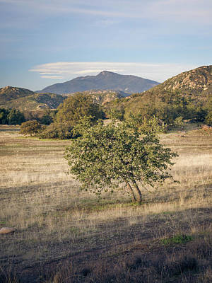 Photograph - Cuyamaca Views And Young Engelmann Oak by Alexander Kunz