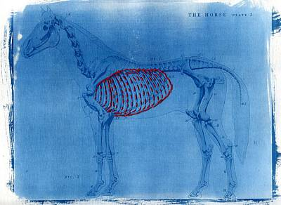 Embroidery Thread Photograph - Cyanotype Horse Embroidery Anatomy Blue Print Cyanotypes by Jane Linders